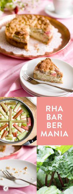 Hier herrscht immer noch absolute Rha-bar-ber-Mania – Rezept für Rhabarber-Käsekuchen mit Mürbeteigboden und Baiserschicht