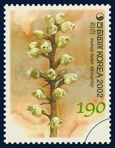Korean Orchid Series (2nd), Gastrodia elata BLUME, Plants, Orange, Cornsilk, 2000 11 12, 한국의 난초 시리즈(두번째묶음), 2000년 11월 12일, 2290, 천마, postage 우표
