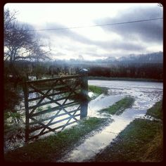 My gate. Gates, Wild Flowers, Country Roads, River, Outdoor, Outdoors, Outdoor Games, Outdoor Living, Rivers