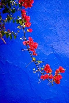 marjorelle blue with red bougainvillea flowers Love Blue, Red And Blue, Red Green, Love Flowers, Beautiful Flowers, Azul Anil, Blue Aesthetic, My Favorite Color, Shades Of Blue