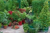 Edible landscaping - Rosalind Creasy, container veggies.