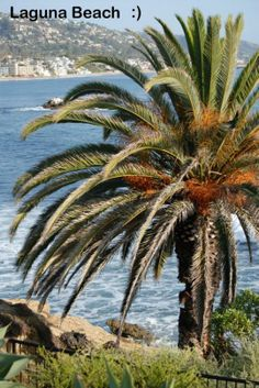 Tigress Revolution and Empower Network Teaming Up  love the palm trees...  so relaxing