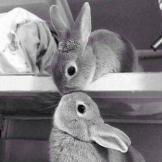 Bunny kisses.....      ᘡղbᘠ
