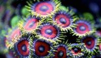 Scoperto il segreto dei coralli