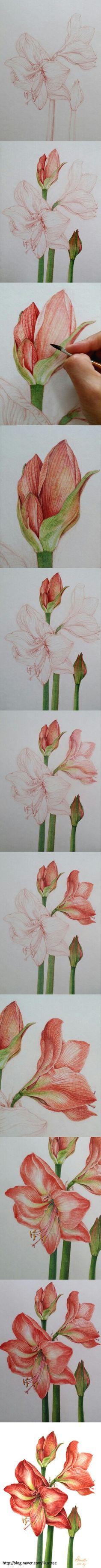 "Botanicalart ""Amaryllis"" watercolor working Illustration by EJ"