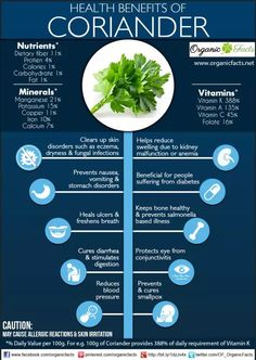 Coriander & Why You Should Up Your Consumption of It