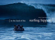 Hippos surfing - Gabon's Loango National Park
