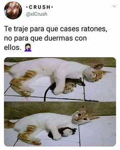 Pin by alejandra conde on Memes Funny Animal Memes, Cat Memes, Funny Cats, Funny Animals, Cute Animals, Funny Spanish Memes, My Animal, Funny Images, Kawaii
