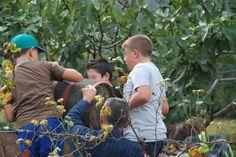 Travaso delle uve