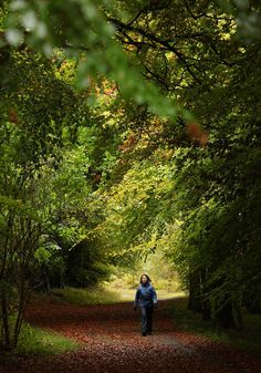 Noticing: How To Take A Walk In The Woods