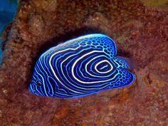Saltwater Aquarium, Aquarium Fish, Ocean Depth, Salt And Water, Corals, Marine Life, Cute Animals, Beauty, Pisces
