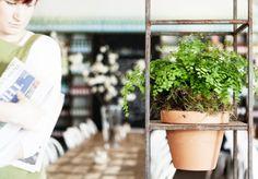 The Stables of Como - Cafe - Food & Drink - Broadsheet Melbourne