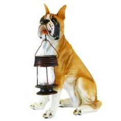 This boxer solar dog statue carrying a solar lantern fitted with a super bright LED bulb will add a cute accent to your patio, deck or garden decor. Solar Lantern Lights, Solar Powered Lanterns, Boxer And Baby, Boxer Love, Dog Garden, Power Animal, Doge, Outdoor Gardens, Cute Dogs