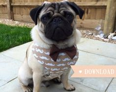 DIY Dog Harness Sewing Pattern and Full by Pugsnkissesuk on Etsy