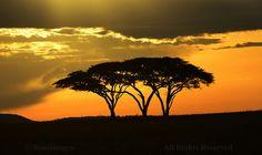 SUNSET #Trees