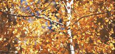 The 18 Most Magical Autumn Sensations  - CountryLiving.com
