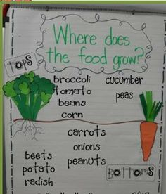 These 9 must make anchor charts for science are easy to recreate! Students in kindergarten, first grade, and second grade will love using them. is always a hit in my classroom! 1st Grade Science, Kindergarten Science, Science Classroom, Teaching Science, Science Activities, Science Ideas, Journeys Kindergarten, Classroom Decor, Teaching Ideas