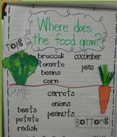 First Grade Fever!: plants