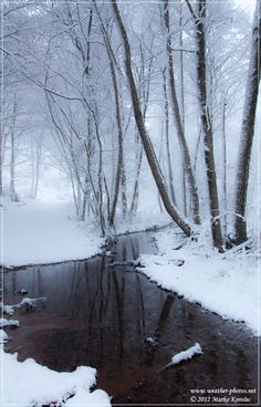 Mysterious Winter ::A few cms of fresh snow made an interesting trip across the highlands of SW Slovenia::