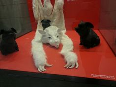 """""""Big Bad Wolf Rug,"""" part of """"Under Above"""" by Terri Aluise at Philadelphia International Airport"""