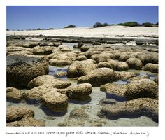 """""""Straddling the biologic and the geologic, stromatolites are organisms that are tied to the oxygenation of the planet 3.5 billion years ago, and the beginnings of all life on Earth."""""""