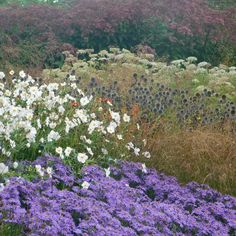 Autumn corner at the Oudolf's field at Hauser and Wirth Somerset. While grasses are taking the scene around the meadow and most of the… Plant Design, Garden Design, Perennial Plant, Fall Winter, Autumn, Aster, Grasses, Winter Garden, Somerset