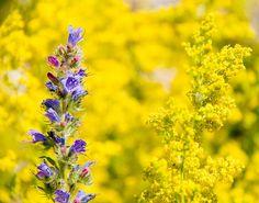 June in the Arboretum, via Flickr. #JMU #PurpleandGold #Dukes #Arboretum #EJCArboretum