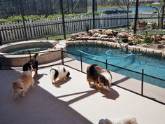 Arizona Pool Fence installs the highest quality swimming pool safety fences, barriers, covers & more throughout Phoenix & Tucson - since