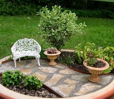 Miniature Garden Tree or Fairy Garden Tree, Indoor or Outdoor, Baby Boxwood by Janit