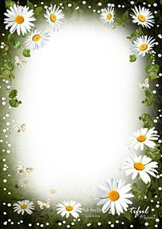 Tenderness of white daisies Photo Frame Wallpaper, Daisy Wallpaper, Framed Wallpaper, Flower Picture Frames, Flower Pictures, Flower Frame, Certificate Background, Boarders And Frames, Paper Flower Art