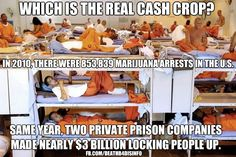 Which is the real cash crop?    In 2010, there were 853,839 marijuana arrests in the U.S.     Same year, two private prison companies made nearly $3 billion locking people up.    [click on this image to find a short video, which takes a satirical look at the criminal justice system]