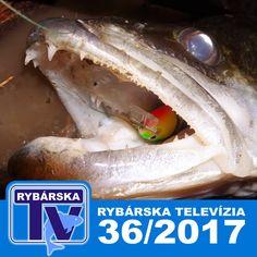 Rybárska Televízia 36/2017 - relácia pre rybárov o rybách a rybolove