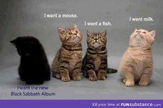 HA! #blacksheep #thatsme #kitties