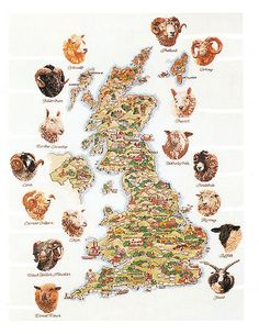 Shetland, Orkney, Cheviot, Wensleydale, Swaledale, Romney, Suffolk, Jakob, Cotswold, Hebridean, Border Leicester, Lonk, Exmoor Horn, Lleyn, Black Welsh Mountain and Dorset Down.