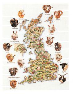 Shetland, Orkney, Cheviot, Wensleydale, Swaledale, Romney, Suffolk, Jakob, Cotswold, Hebridean, Border Leicester, Lonk, Exmoor Horn, Lleyn, Black Welsh Mountain and Dorset Down.
