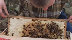 how to get rid of bees. (i'm scared of these little guys.)
