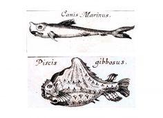 Animal - Fish - Medieval