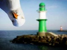 Funny seagull caught on a web cam. #funnyanimals   Original source unknown.