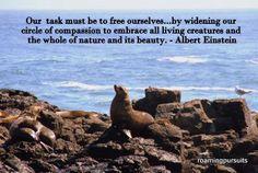 Seal Frolic Albert Einstein, Sailing, Seal, Cruise, Wildlife, Coast, Creatures, Island, Water