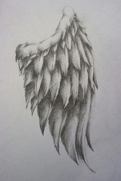 Fluffy wing