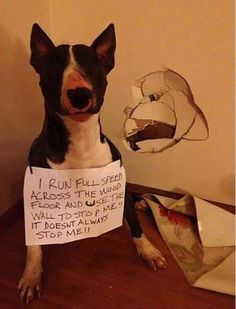 20 Hilarious Pet Shaming Signs