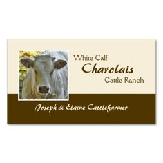 Charolais beef business card