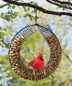 Peanut Wreath Feeder: Peanut Wreath Feeder is a decorative way to feed jays, chickadees and cardinals. It will also attract squirrels and keep them away from the bird seed. x with a hook. Peanut Bird Feeder, Bird Feeders, Outdoor Life, Outdoor Gardens, Outdoor Living, Lawn And Garden, Home And Garden, Wreath Rings, Wire Wreath