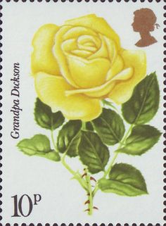 Grandpa Dickson Rose from 1976 'Centenary of Royal National Rose Society' Uk Stamps, Postage Stamp Art, Flower Stamp, Fauna, Stamp Collecting, Mail Art, Flower Power, World, Royal Mail
