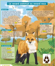 Zoo Signage, Flags Europe, Animals Information, Study French, French Phrases, Animal Habitats, French Language Learning, Science Biology, Teaching French