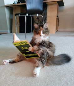 Softlys ♥  Catching up on some reading #funny cats