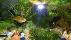 Aquarium met leuke kleur knikkers op de bodem.