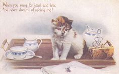 Cat on a tea cart watches a bee , 00-10s TUCK