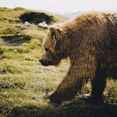 Bear with us we'll think of a pun soon. Capture by @shortstache. #modernoutdoors by modernoutdoors