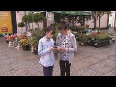 Παιδιά και κινητά τηλέφωνα: μια σχέση εξάρτησης - hi-tech
